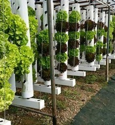 USA - Urban Aquaponic Farmer and Chef Redefines Local Food in Orange County, CA | Aquaponics in Action | Scoop.it