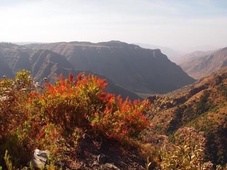 Ethiopia to Burn Ivory Stockpile   Wildlife and Environmental Conservation   Scoop.it