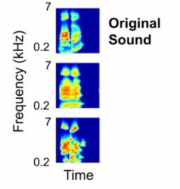 Scientists decode brain waves to eavesdrop on what we hear | Amazing Science | Scoop.it