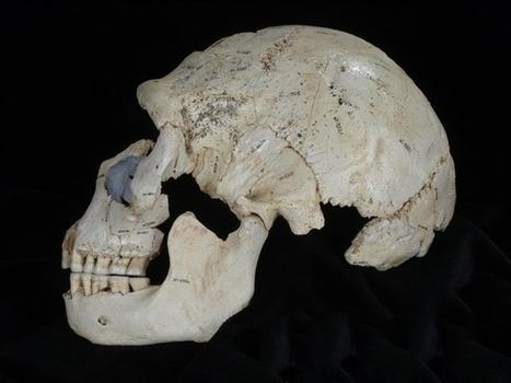 ¿Cómo se originaron los Neandertales? | Arqueología, Historia Antigua y Medieval - Archeology, Ancient and Medieval History byTerrae Antiqvae | Scoop.it