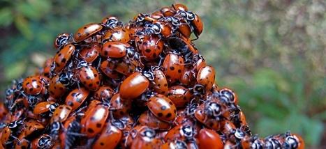 Sans les insectes, notre monde s'écroulerait   Biodiversité   Scoop.it