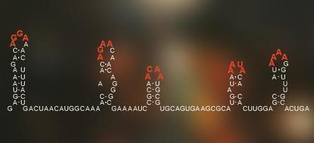 """Researchers discover RNA viral """"Enigma machine"""" 