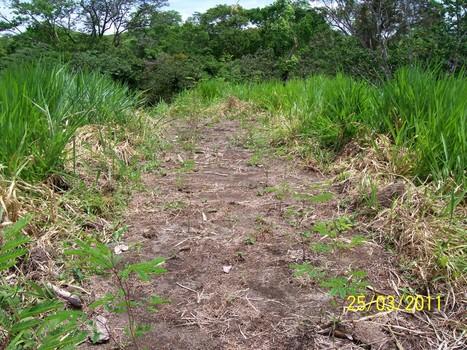 Colombia: Arreglos Silvopastoriles   Sistemas Silvopastoriles   Scoop.it
