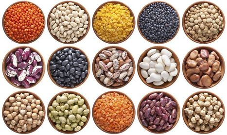 2016, Année internationale des légumineuses | 2016 International Year of Pulses | Mipygreen | Scoop.it