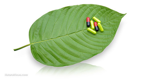 Big Pharma's patents expose real reason why corrupt DEA wanted to ban Kratom | Liberty Revolution | Scoop.it