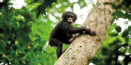 En Bourse, les chimpanzés battent les gérants | Dans la place | Scoop.it