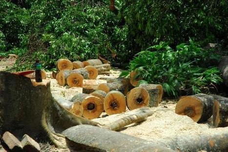 El año pasado se deforestó en Santander un área equivalente a tres veces Bucaramanga   Regiones y territorios de Colombia   Scoop.it