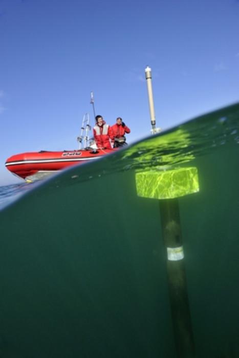 Argo ou la révolution des données : quinze ans d'observations de l'océan global | Sale temps pour la planète | Scoop.it