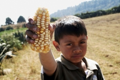 The Great Mexican Maize Massacre | ETC Group | Food issues | Scoop.it
