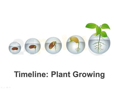 Timeline Plant Growing - Versatile PPT Graphics to depict Growth! | PowerPoint Presentation Tools and Resources | Scoop.it