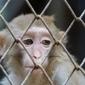 Une étude de Born Free épingle les parcs zoologiques français | écolo | Scoop.it