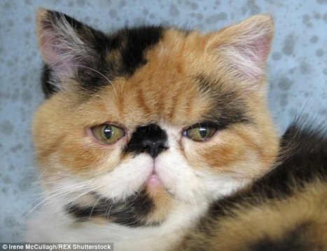 Researchers believe a cat's fur colour linked to how aggressive it is   Kickin' Kickers   Scoop.it