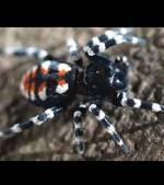 Un nouveau genre d'araignée baptisé en hommage au rocker Lou Reed | EntomoNews | Scoop.it