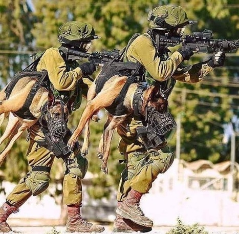 You know you're a badass when you carry a holstered attack dog. | Airsoft Showoffs | Scoop.it