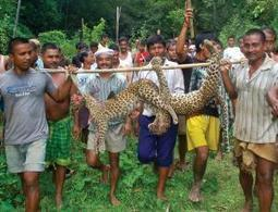 How conservation drives villagers to kill animals - life - 07 January 2015 - New Scientist | Conservation | Scoop.it