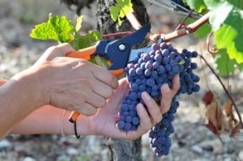 Devenir vigneron ne s'improvise pas | vin et société | Scoop.it