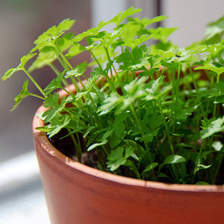 Food as Medicine: 9 Food Cures You Can Grow at Home: Organic Gardening | 100 Acre Wood | Scoop.it