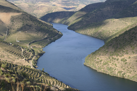 Port Wine Prices Rise | The Douro Index | Scoop.it