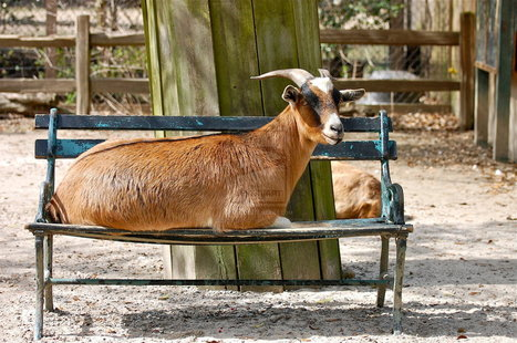 Under the bench the goat dies: Italian tongue twisters Part 1 | Holiday in Pisa | Scoop.it