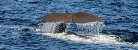 Arctic Whale Tours | The Arctic Circle | Scoop.it