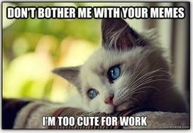 Future of Corporate Communication: The (Cat) Meme - Communicate [your] Skills   Corporate Communication & Reputation   Scoop.it