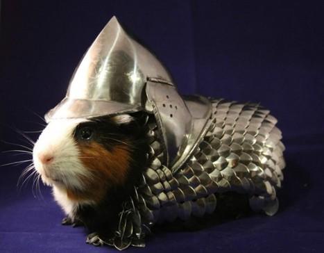 Une armure pour cochon d'Inde remporte un franc succès sur e-Bay | Mais n'importe quoi ! | Scoop.it