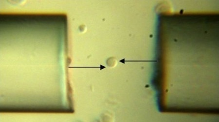"""World's smallest wrench"" is able to rotate individual cells 