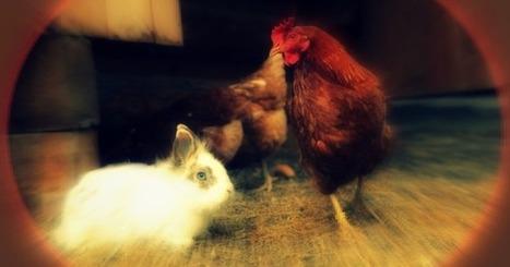 Ragazza ha rapporti sessuali con conigli e polli, poi li squarta e riprende la scena | Religulous | Scoop.it