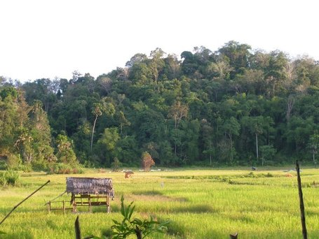 Certifying eco-friendly rubber to protect biodiversity | Agroforestry World Blog | The Glory of the Garden | Scoop.it