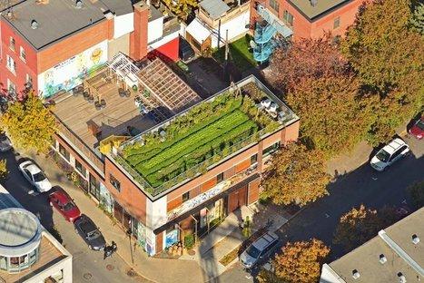 Pour un cadre municipal favorable à l'agriculture urbaine: les leçons de Vancouver, Seattle et Toronto - Nouvelles - Agriculture urbaine Montréal | Nourrir la ville | Scoop.it