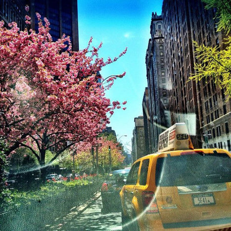 See NYC Through the Eyes of a Taxi Driver | The Blog's Revue by OlivierSC | Scoop.it