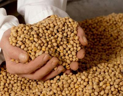 México / Apicultores logran impedir la siembra de soya transgénica - | MOVUS | Scoop.it