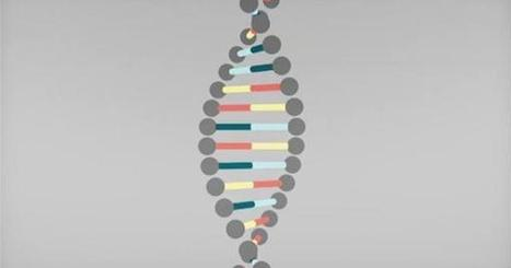 DNA explained via a beautiful animation | RHINOSINUSITIS & HAEMORRHOIDS | Scoop.it