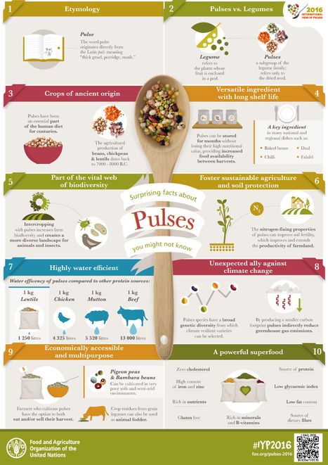 Surprising facts about pulses you might not know | SEED DEV LAB Biblio | Scoop.it