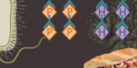 Une protéine bactérienne en cause dans l'anorexie et la boulimie | Santé & Médecine | Scoop.it