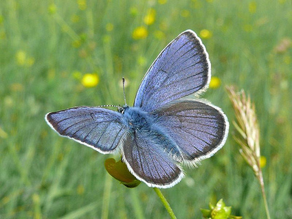 Once Upon a Time Baby Names: Rare Butterfly Baby Names   The world today   Scoop.it