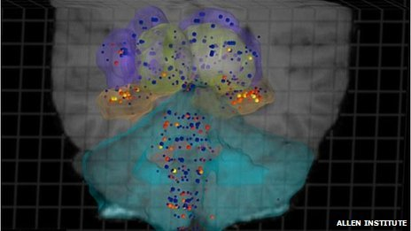 Human brains follow the same basic molecular 3D pattern despite different individual personalities | Thinking, Learning, and Laughing | Scoop.it