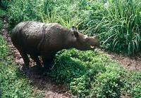 Rhinos listed among the most threatened species | Help Wildlife ... | Save our Rhino and all animals...this is what it looks like!!!!! | Scoop.it