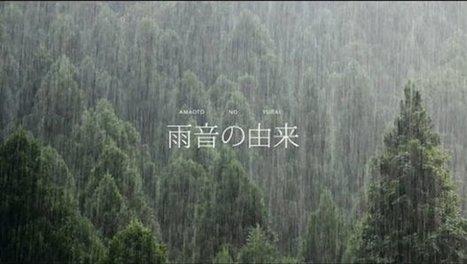 Found Footage : L'origine du son de la pluie | What's new in Visual Communication? | Scoop.it