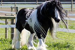 Meet Orana's new 'fairy-tale like' horses | Animals and Other Stories | Scoop.it