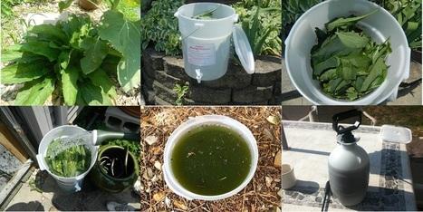 Ђубриво од гавеза - врхунска прихрана | Гајење биља на природан начин | Scoop.it