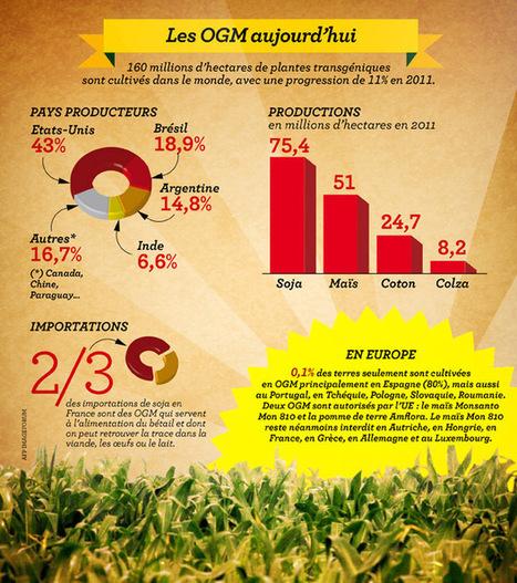 INFOGRAPHIE. Les OGM en France et dans le monde : on en est où ? | Stretching our comfort zone | Scoop.it