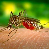 Información sobre el Virus del #Zika: MedlinePlus en español | Salud Publica | Scoop.it
