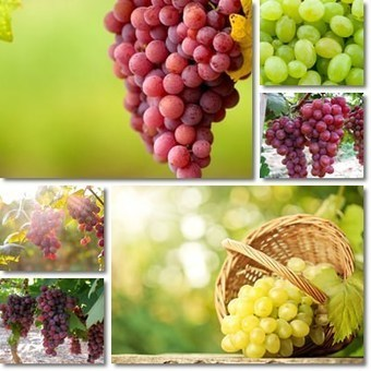 What are the Properties and Benefits of Grapes? | Biotivia Longevity | Scoop.it