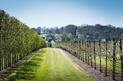 "ENGLAND: ""Over the next 5-10 years a lot of growers will grub up and sell out as the reality is miles away from the romance of making #wine "" 