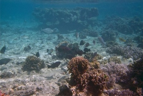 Underwater Cameras Track Fish Cleaning Up Coral Reefs - RedOrbit | Coral Reefs | Scoop.it