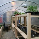 London retail space becomes world's first farm in a shop | Springwise | Green entrepreneurship and eco-innovation | Scoop.it