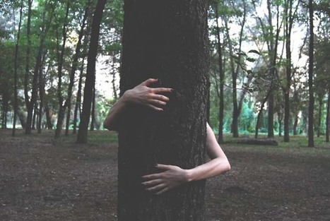 Science Proves Hugging Trees Is Good for Health | LOCAL HEALTH TRADITIONS | Scoop.it
