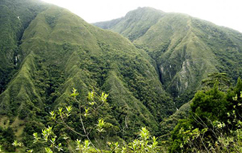Descarga en tu celular los sonidos de la Biodiversidad colombiana. | Agua | Scoop.it