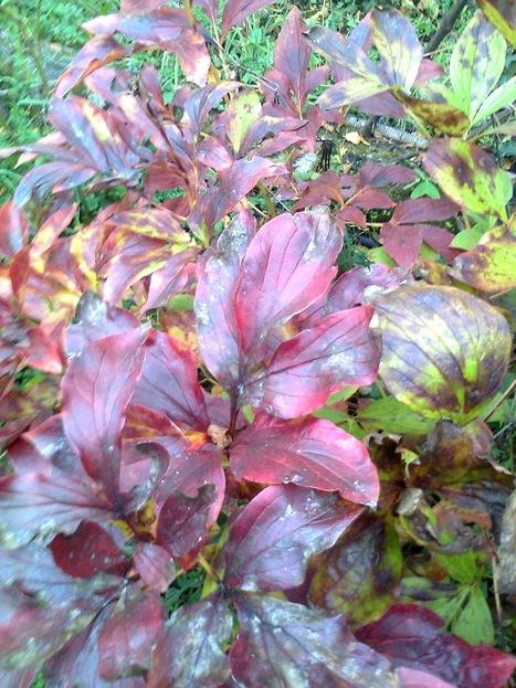 Lorsque l'automne moirait mon feuillage | The Blog's Revue by OlivierSC | Scoop.it